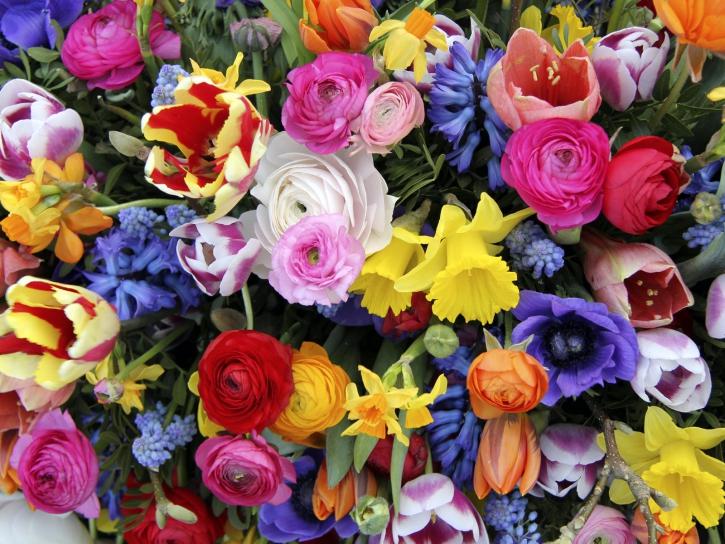 1a11caa58 Význam farieb kvetov. Farby ovplyvňujú človeka počas celého života. Počnúč  od farebného oblečenia, ktoré si často osoba vyberá podľa toho, ako sa cíti  alebo ...